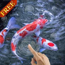 koi free live wallpaper apk koi fish live wallpaper android apps on play