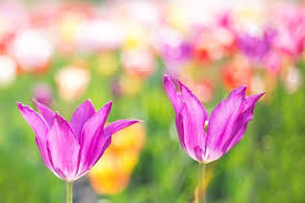 Spring Flower Pictures Floral Free Pictures On Pixabay