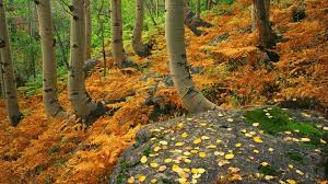 rocky mountain national park wallpapers smart phone ferns rocky cool mother nature autumn cute