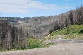Wildfires In Colorado by In Colorado Forests More Trees Than Ever Are Standing Dead