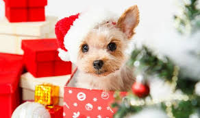 don t give dogs as presents pet petplus