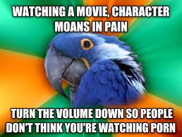 livememe com paranoid parrot