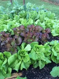 harvesting tips for extending your fall vegetable garden