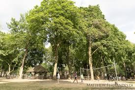 dufferin grove the matthew fernandes team toronto real estate