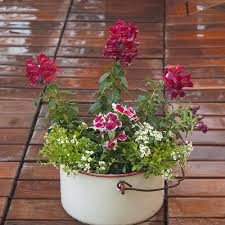 Container Gardening Ideas Beautiful Cool Season Container Garden Ideas Costa Farms