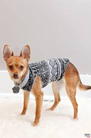 make a diy sweater from a sweatshirt doggie travel tips