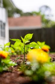 square foot gardening flowers marigolds in your square foot garden
