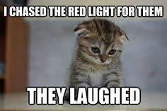 Sad Kitty Meme - 12 very sad kittens that never quite became a meme animal kitten