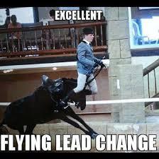 Horse Riding Meme - 312 best equestrian memes images on pinterest
