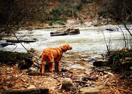 Ga State Parks Map by 7 Georgia State Parks To Explore With Your Pup