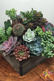 Ideas For Indoor Succulents Design Succulent Design In Wooden Box Local Delivery Only Delivery