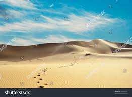 thar desert animals thar desert india stock photo 80366797 shutterstock