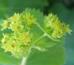 344 best flower seeds images on pinterest flower seeds