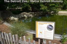 metro detroit mommy what u0027s new at the zoo