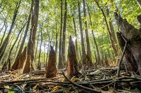Arkansas forest images Why you should be forest bathing in arkansas right now travel jpg