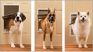 installing pet door in glass door pet doors for doors cat u0026 dog doors petdoors com