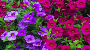 Plants That Don T Need Much Sun How To Grow Flowers Easy To Grow Annuals With Low Maintenance By