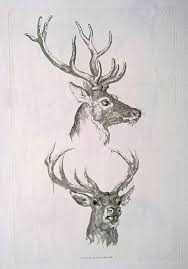 Stag Head Designs 33 Best Stag Head Tattoo Ideas Images On Pinterest Stag Head