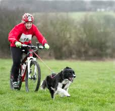 Memory Foam Manrides How To Safely Bike With Your Dog Exercises Dog And Animal
