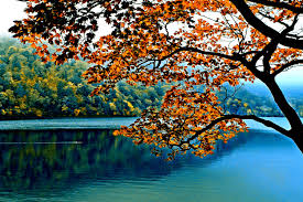 lakes branch nature calm lake autumn tree wallpapers district for