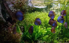 aquarium bureau les aquariums de poissons et corails au bureau améliorent la santé