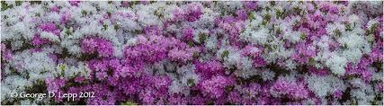garden flowers gallery u2014 george lepp imaging
