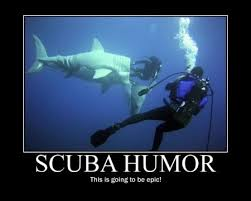 Scuba Meme - 36 best ocean memes images on pinterest ha ha funny animals and