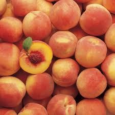 Best Fruit Trees For North Carolina - peach trees for sale buy peach trees from stark bro u0027s