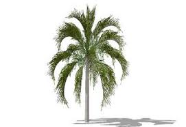 sketchup components 3d warehouse plants queen palm