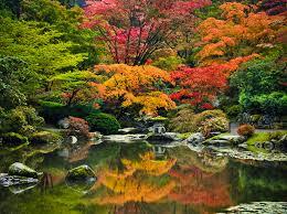 japanese garden maple viewing festival at seattle japanese garden oct 15 16