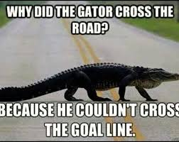 Florida Gator Memes - 39 best gator hater images on pinterest florida gators football
