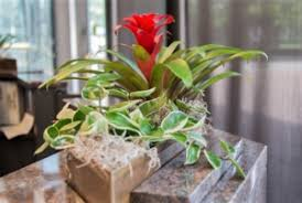 Small Desk Plants by Fast And Easy Installation Of Your New Plants