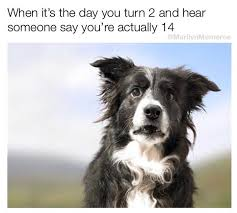 Hilarious Dog Memes - hilarious dog memes that will cure your bad day 10 justviral co