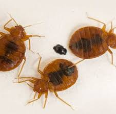 What Kills Bed Bugs And Their Eggs Bed Bug Spray Reviews What Works And Why