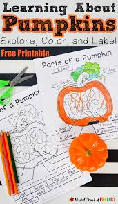 learning about pumpkins explore color and label free printable