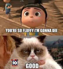 Grumpy Cat Photo 1 Best - 15 best grumpy cat images on pinterest grumpy cat funny animal