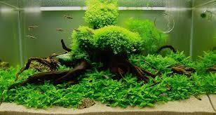 idee deco aquarium beautiful aquascape designs for aquariums with green plants inside