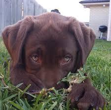 Puppy Dog Eyes Meme - i now understand the saying puppy dog eyes imgur