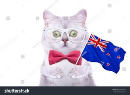 Country Flags Small Beautiful British Cat Flag New Zealand Stock Photo 255622663
