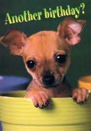 chihuahua gifts note cards greeting cards and collectibles