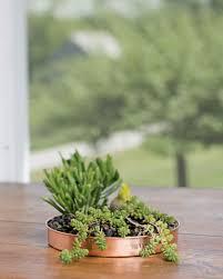 indoor pots and planters for succulents herbs u0026 houseplants