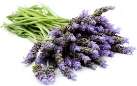 lavender flowers lavender wand flowers information recipes and facts