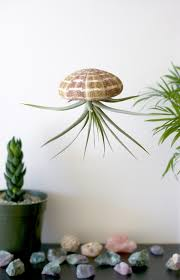 hanging air plant u2014 a charming project
