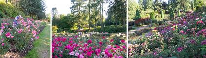 plants native to china iconic gardens of portland oregon the rose garden japanese