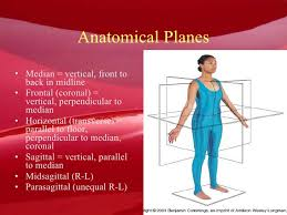 The Human Anatomy Pictures Human Anatomy 101