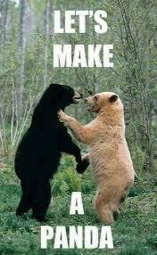 Meme Bear - funny bear meme