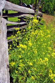 plants native to north carolina 72 best north carolina wildflowers images on pinterest native