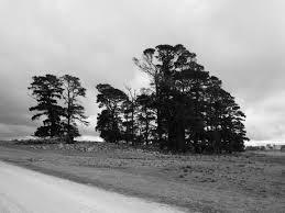 elm tree u2013 ian hoskins u2014 australian historian and author