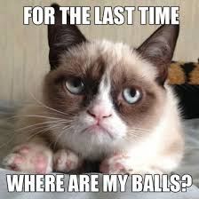 for the last time where are my balls funny cat meme
