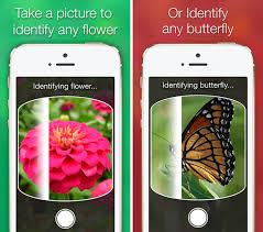 Flower Garden App by Likethat Garden Iphone Ipad App Download Chip